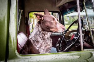 Coprisedile auto per cani